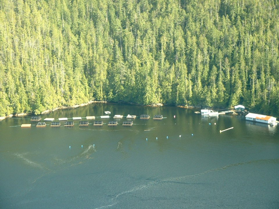 Effingham Inlet Oysters are grown in the heart of Barkley Sound on the west coast of Vancouver Island