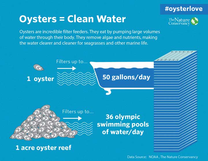 Oysters = Clean Water